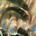 FishSPA